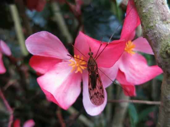 Posada Estancia San Antonio: Orchideas