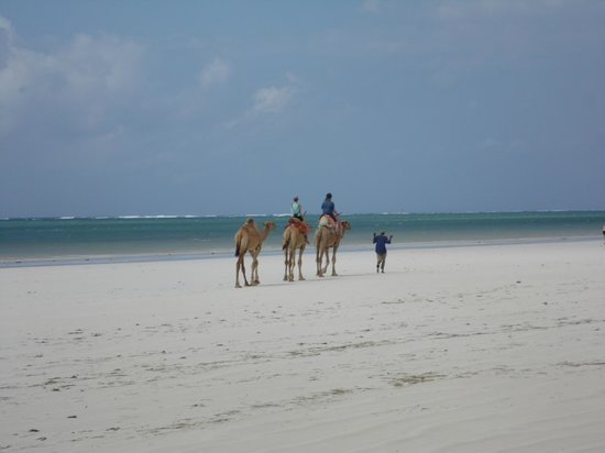 Diani Beachalets: camel ride