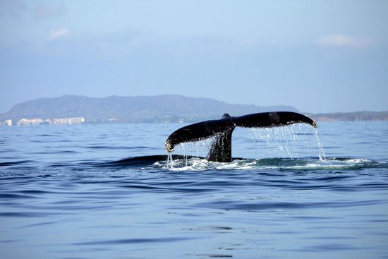 Whale Watching Photo Safari by Vallarta Adventures: Bye Bye and they were off
