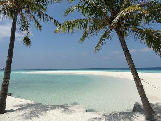 Embudu Village : plage et palmiers
