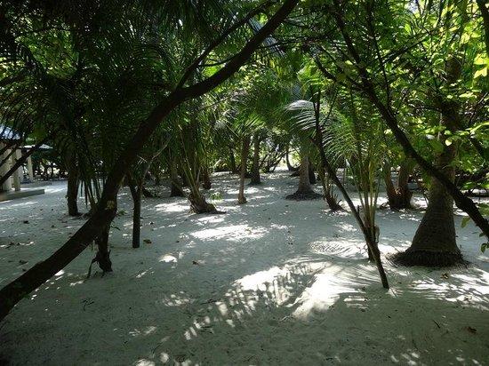 Embudu Village : végétation