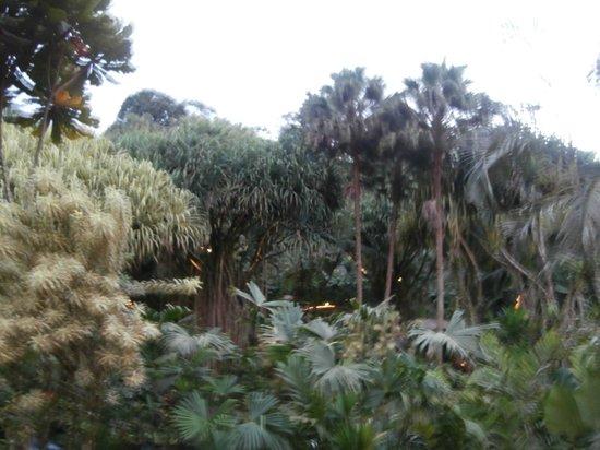 Tabacon Grand Spa Thermal Resort: vistas desde la terraza del comedor