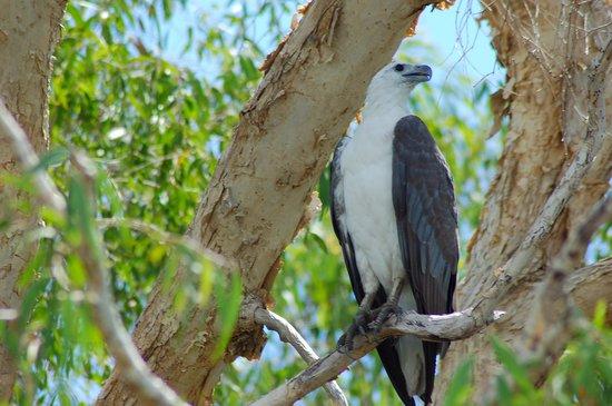 カカドゥ国立公園 Image
