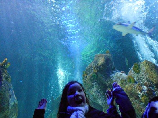 Weymouth SEA LIFE Adventure Park: shark tunnel