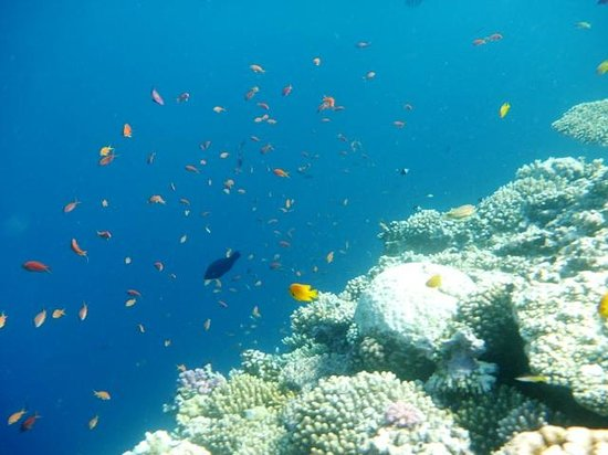 Red Sea Relax Resort: More clear water near the Blue Hole