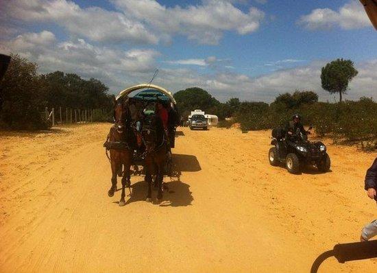 Ardea Purpurea Lodge: paseo a caballo