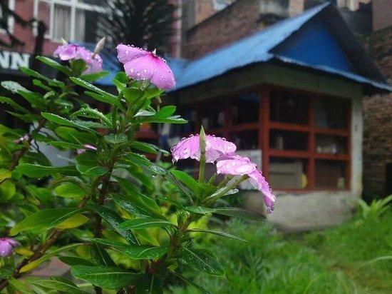 hotel discovery inn,, green garden
