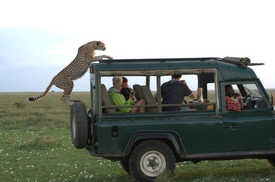Cheetah Tented Camp: momentos increibles