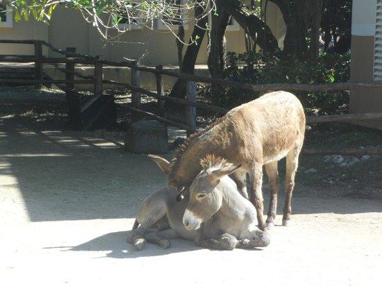 Sandos Caracol Eco Resort: Una foto que enternece... los arrumacos de los burritos