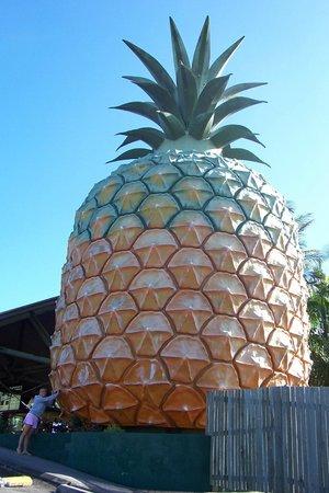The Big Pineapple: Big Pineapple