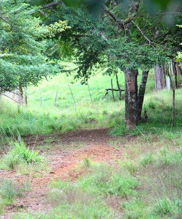 Hacienda Dona Carmen: Alrededores de la finca