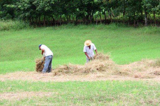 Hacienda Doña Carmen: Actividades de agroturismo
