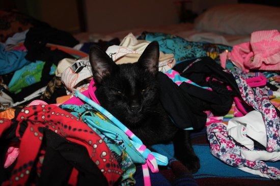 Hotel Kin Ha Pueblo: El gato nero fortunato
