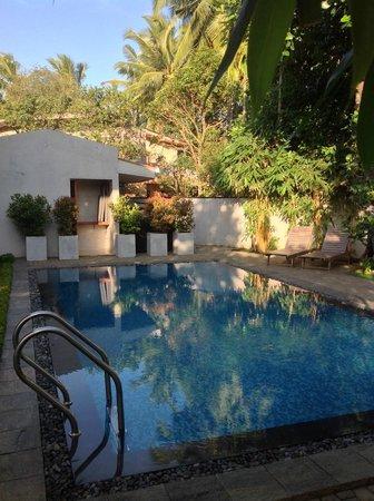 Clove Villa : Pool