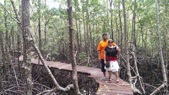 Tours Koh Samui: Mangrove Forest, Ko Taen