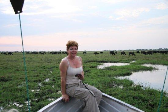 Sanctuary Chobe Chilwero: Grandes manadas de Bufalo a los que te acercan en la barca