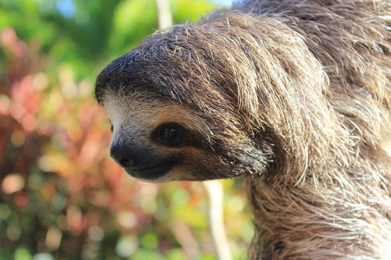 Casa Mariposa: One of the sloths in the garden