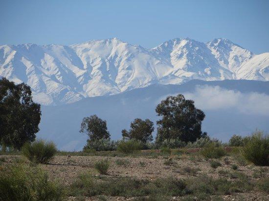 The Capaldi : Atlas mountains