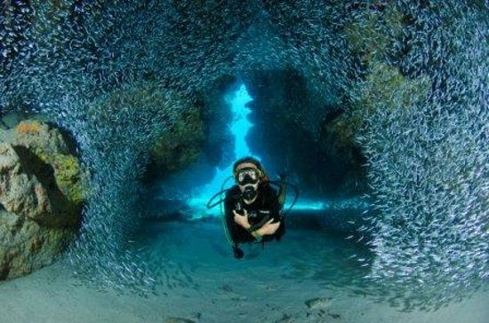 Lobster Pot Dive Center (Grand Cayman) - All You Need to Know Before You Go (with Photos ...