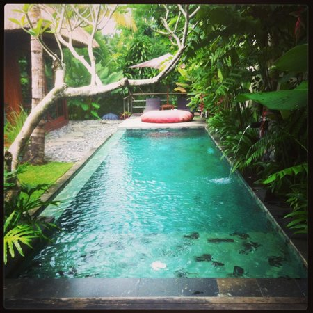 Luwak Ubud Villas: our own private pool