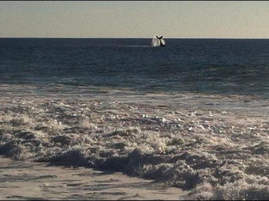 Baja Beach Oasis: fantastic whale watching right off the beach
