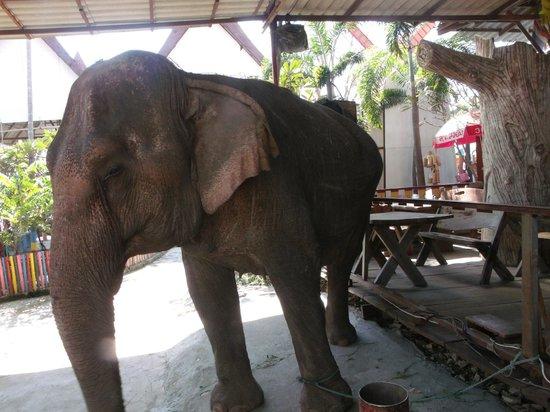 Ayothaya Floating Market & Elephant Village : Scarred Elephant