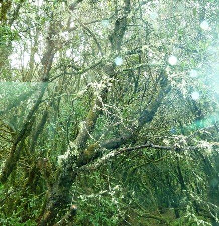 La Laguna Grande: Getting soaking wet