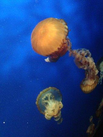 Georgia Aquarium: medusas!