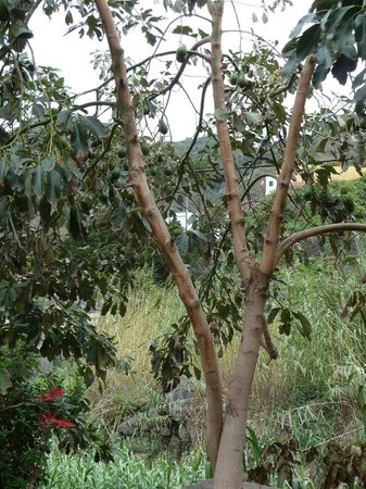 Jardín de Frutas Tropicales (Tropical Fruit Garden)