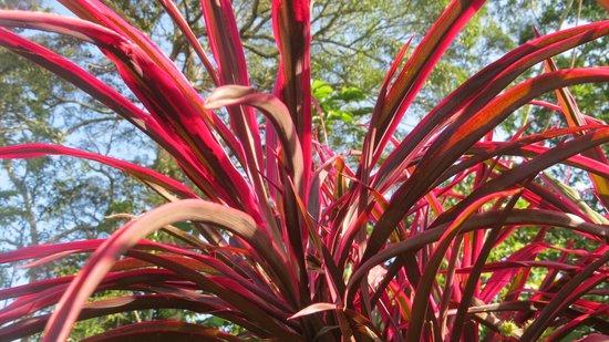 Granja San Judas Tadeo: some flora on the grounds
