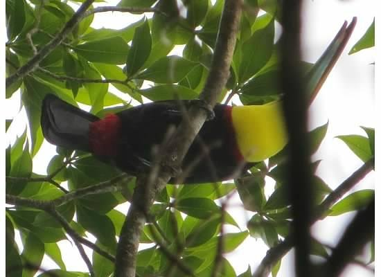 Hidden Canopy Treehouses Boutique Hotel: This guy was visiting our treehouse one afternoon