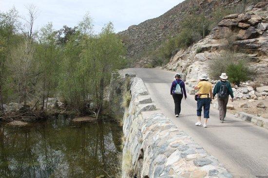 Sabino Canyon: Strolling along