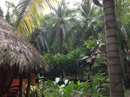 Cariblue Beach & Jungle Resort : dormi nella Jungla .....