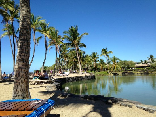 Waikoloa Beach Marriott Resort & Spa : beautiful beach day