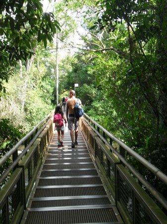 Iguazu Falls : Uno de los circuitos.....