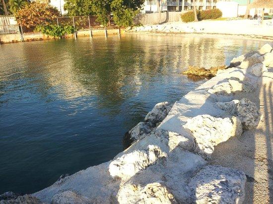 Breezy Palms Resort : swimming area