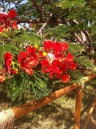 Dongwe Club: Che fiore è?
