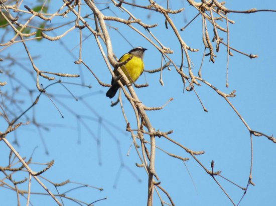 Magdalena Grand Beach & Golf Resort: Bananaquit outside our hotel room