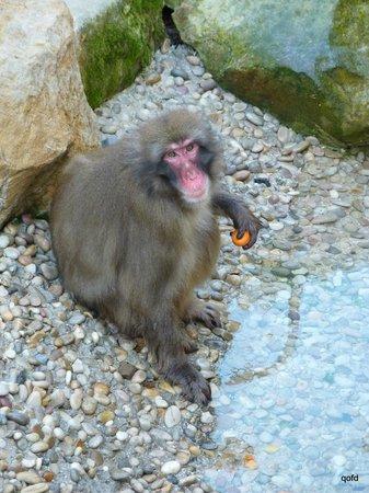 Parque de la ciudad: Macaques