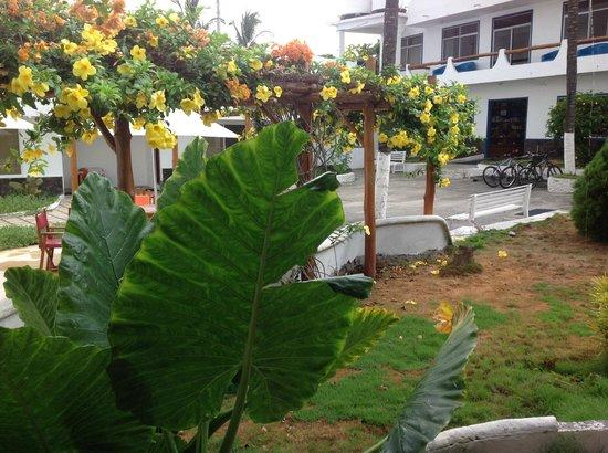 Hotel Ninfa : giardino con scorcio dell'hotel