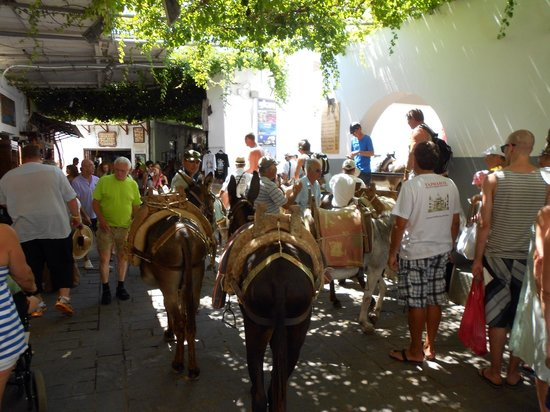 Lindos : Ride a donkey to the top