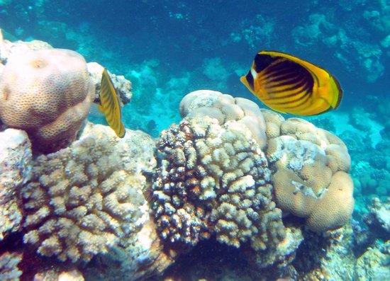 Melia Sharm Resort & Spa: cudne rybki