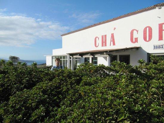 Gorreana Tea Plantation: чай