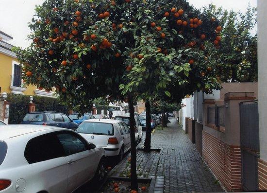 Hostal San Vicente II: the street