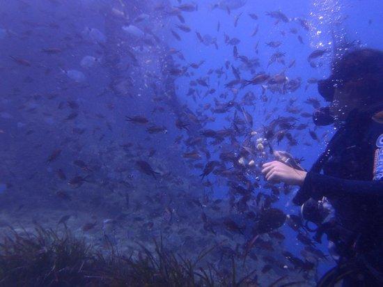 Santorini Dive Center: Remezzo reef Caldera