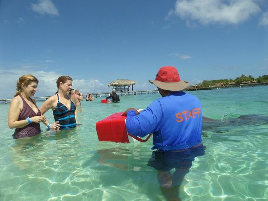 Roatan Institute for Marine Sciences - Anthony's Key Resort: A guide will answer all of your questions