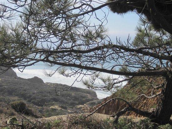 Torrey Pines State Natural Reserve: Torrey Pine state park