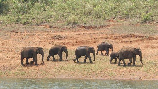 Periyar Wildlife Sanctuary : 1