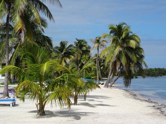 Blackbird Caye Resort: Strand