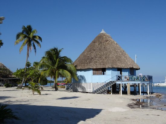 Blackbird Caye Resort : Bar